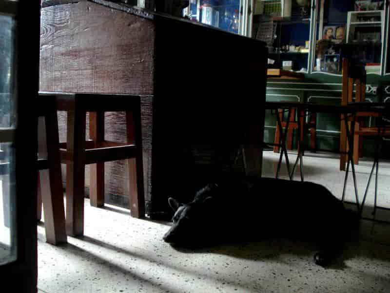 Old Town Cafe Bangkok in The dog